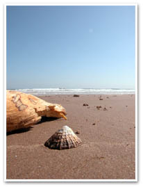 A Sea Shell On Beadnell Beach